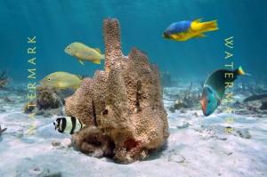 coral-fish-1650-blur